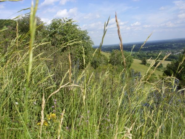 Conservation Work at Box Hill